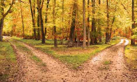 13_roads_diverged_in_a_yellow_wood1
