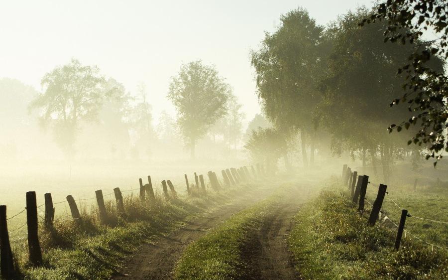 Misty morning, Lower Saxony, Germany